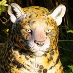 cible 3d target 3d leopard